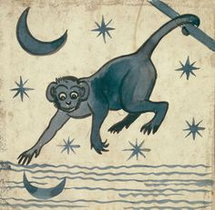 The monkey and the moon reflection