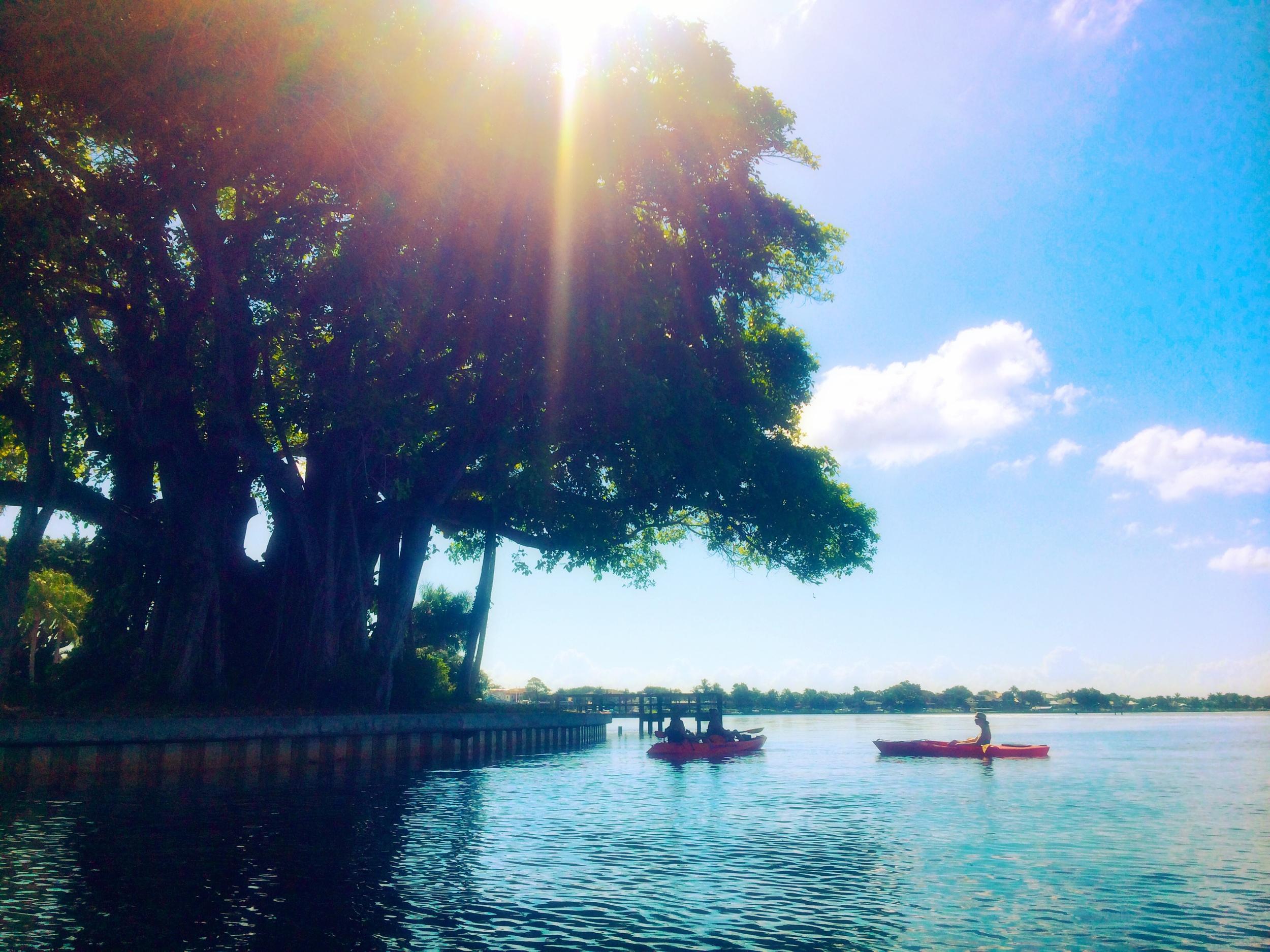 JUPITER FLORIDA KAYAKING BANYAN TREE