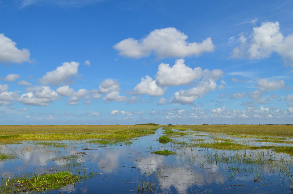 THE EVERGLADES IN FLORIDA