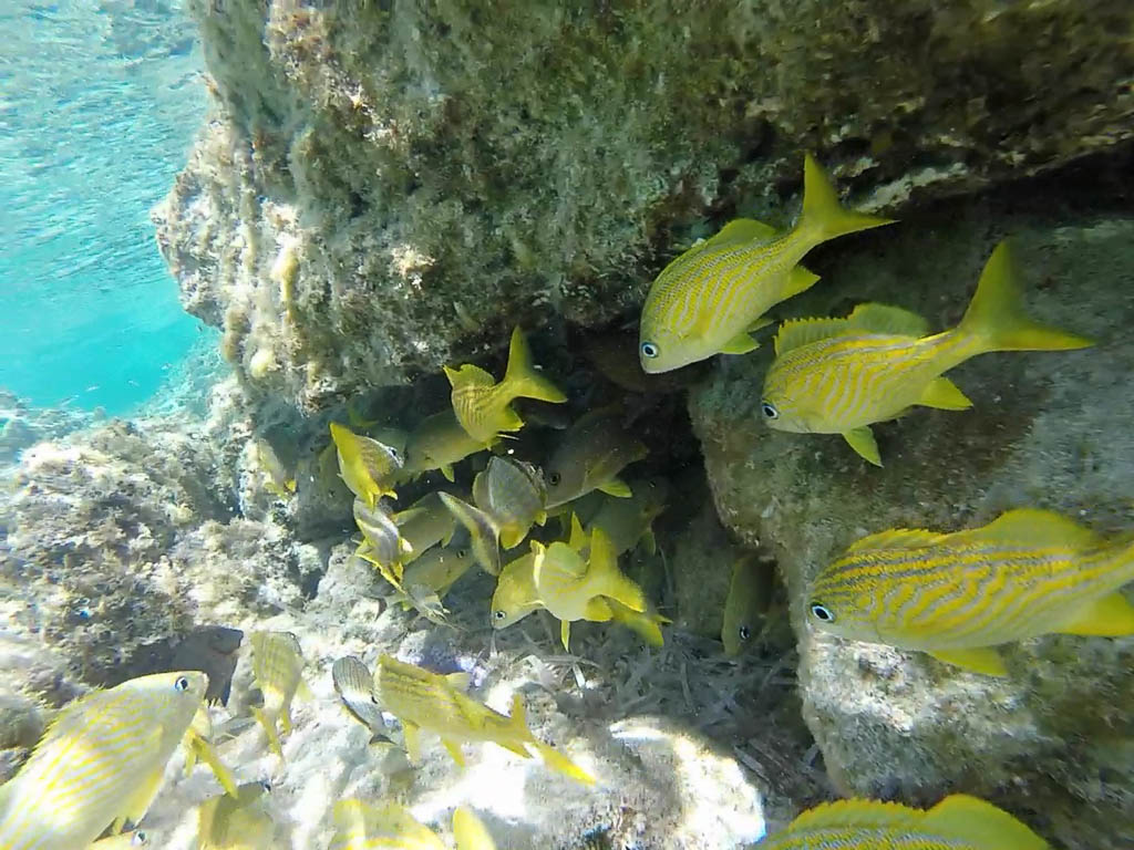 Things to do in Nassau, Bahamas: snorkeling