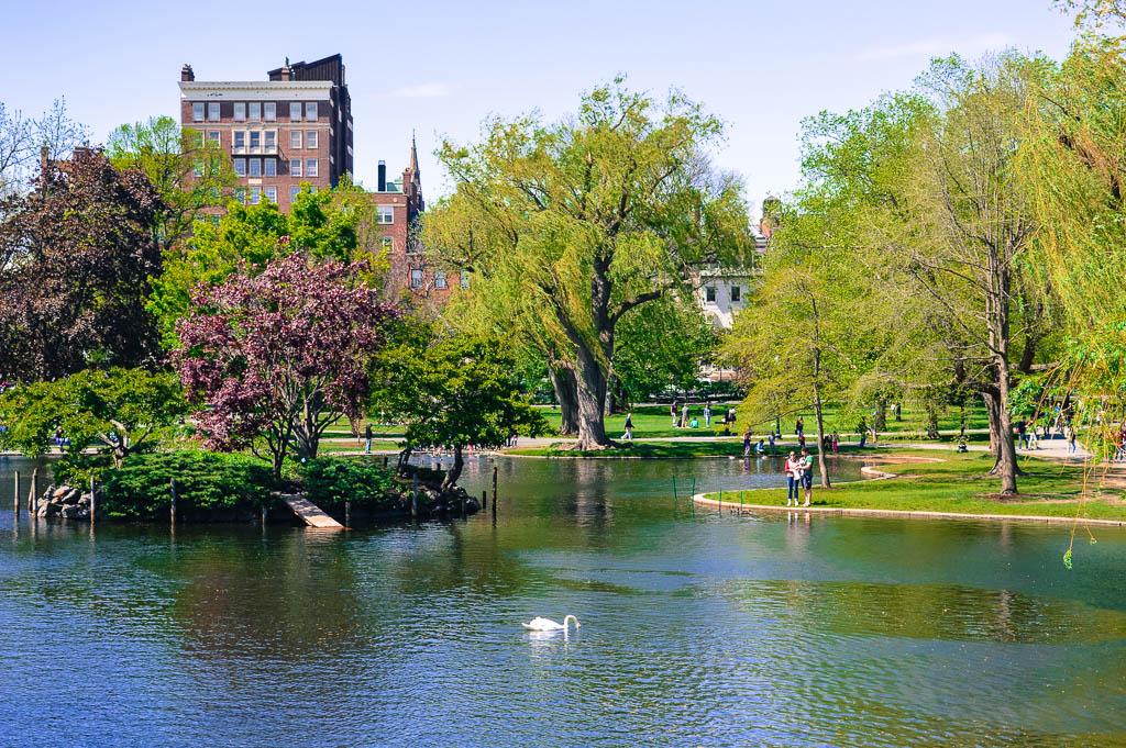 THE PUBLIC GARDENS IN BOSTON
