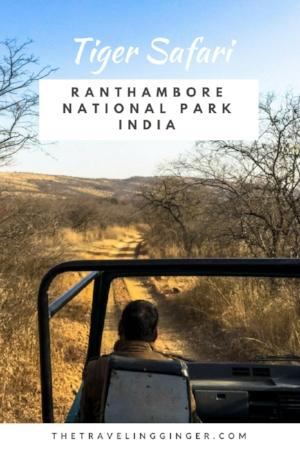 TIGER SAFARI IN RANTHAMBORE NATIONAL PARK INDIA