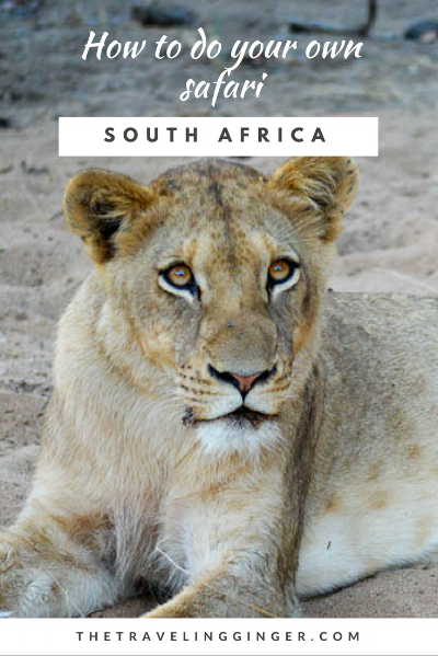 HOW TO DO A SAFARI IN SOUTH AFRICA