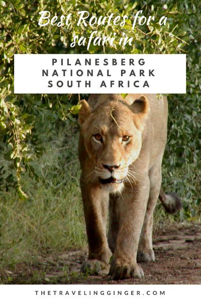 best roads in pilanesberg national park south africa