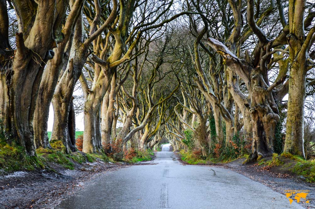 THINGS TO DO IN NORTHERN IRELAND: THE DARK HEDGES