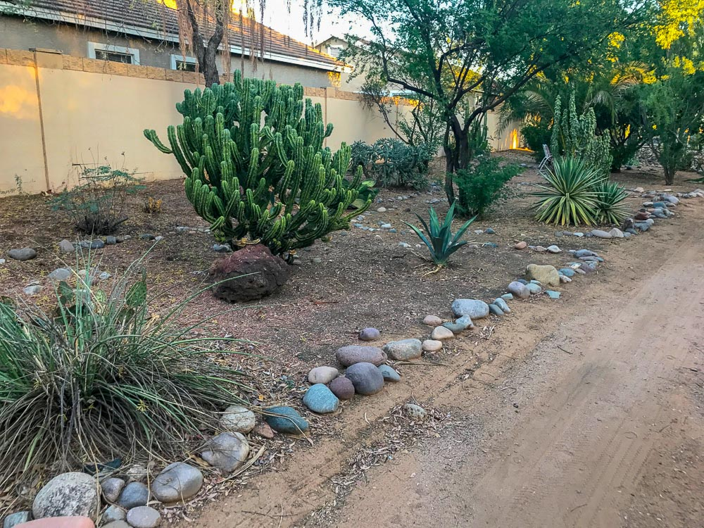 things to do in arizona - cacti