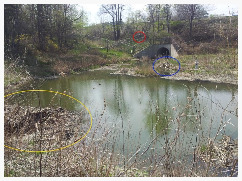 Rouge Hill Beaver Pond