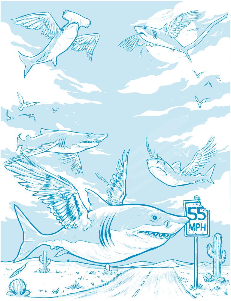 SharkBirds_Final.jpg