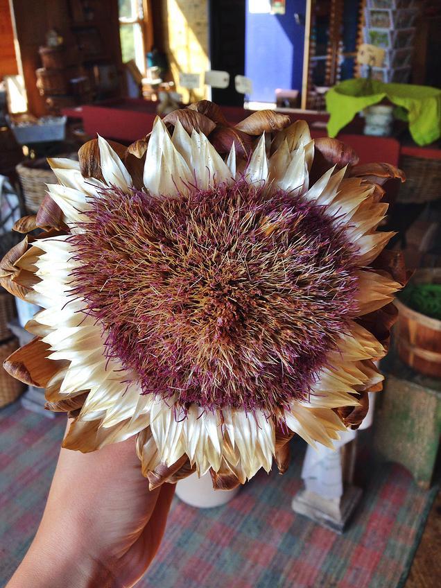 {an absolutely stunning artichoke flower}