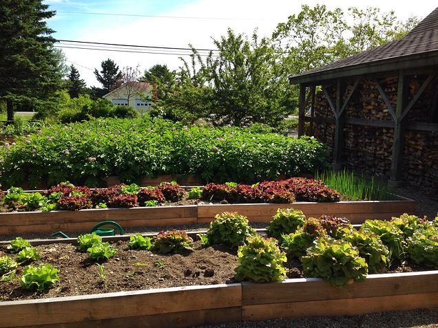 {Some of their beautiful gardens. Check out that lettuce!}