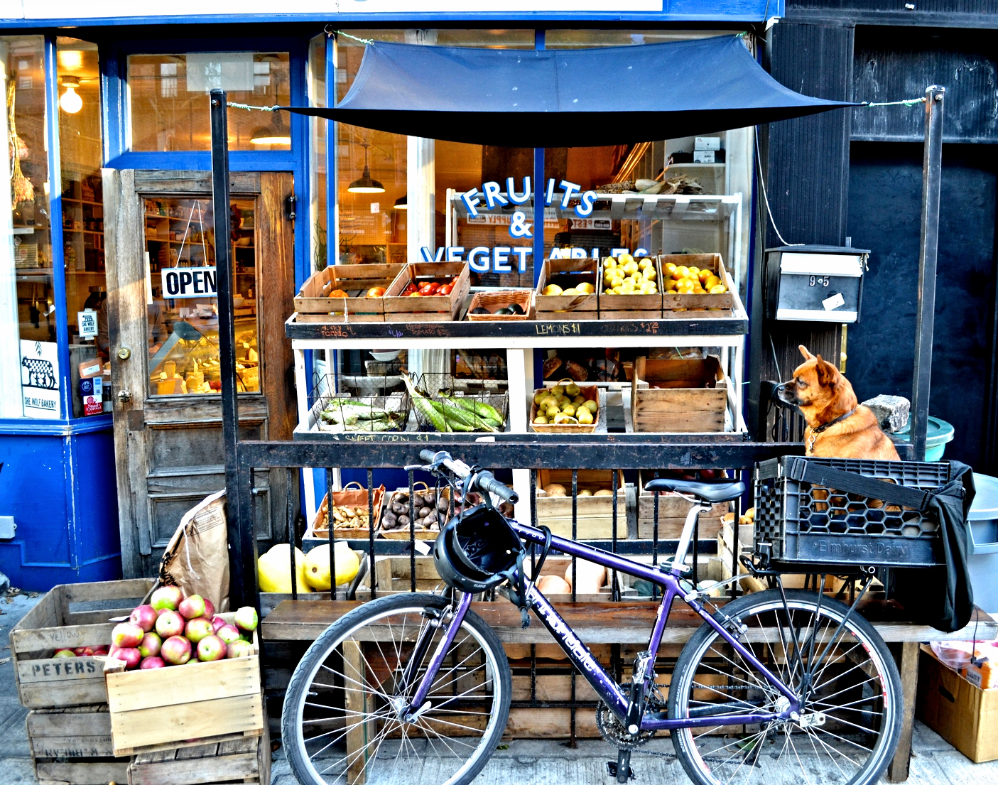{Cute pup waiting for his owner outside a really cool food shop}