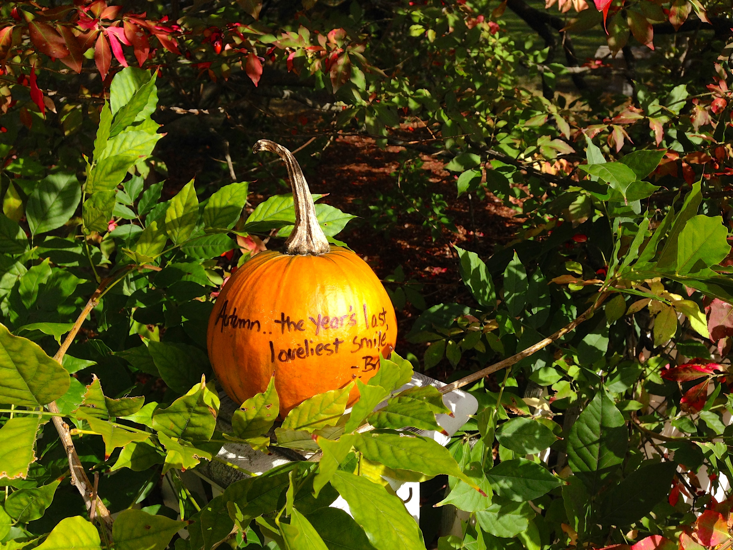 {A house in town with quotes written on the pumpkins lining their yard}