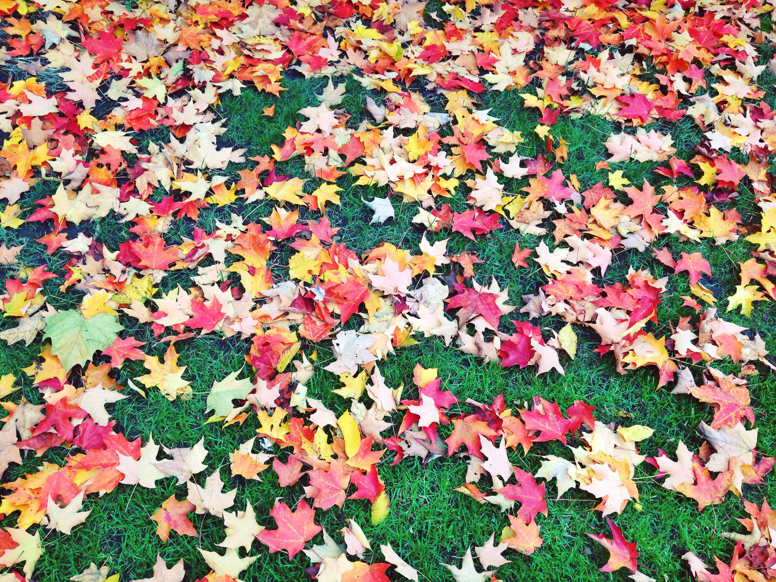 {Fall leaves take two- can't get enough}