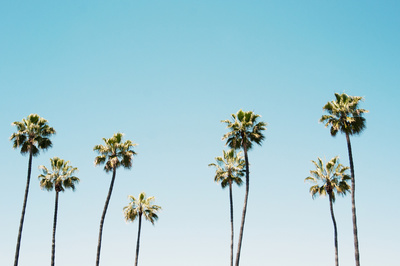 California Summer , starting at $18