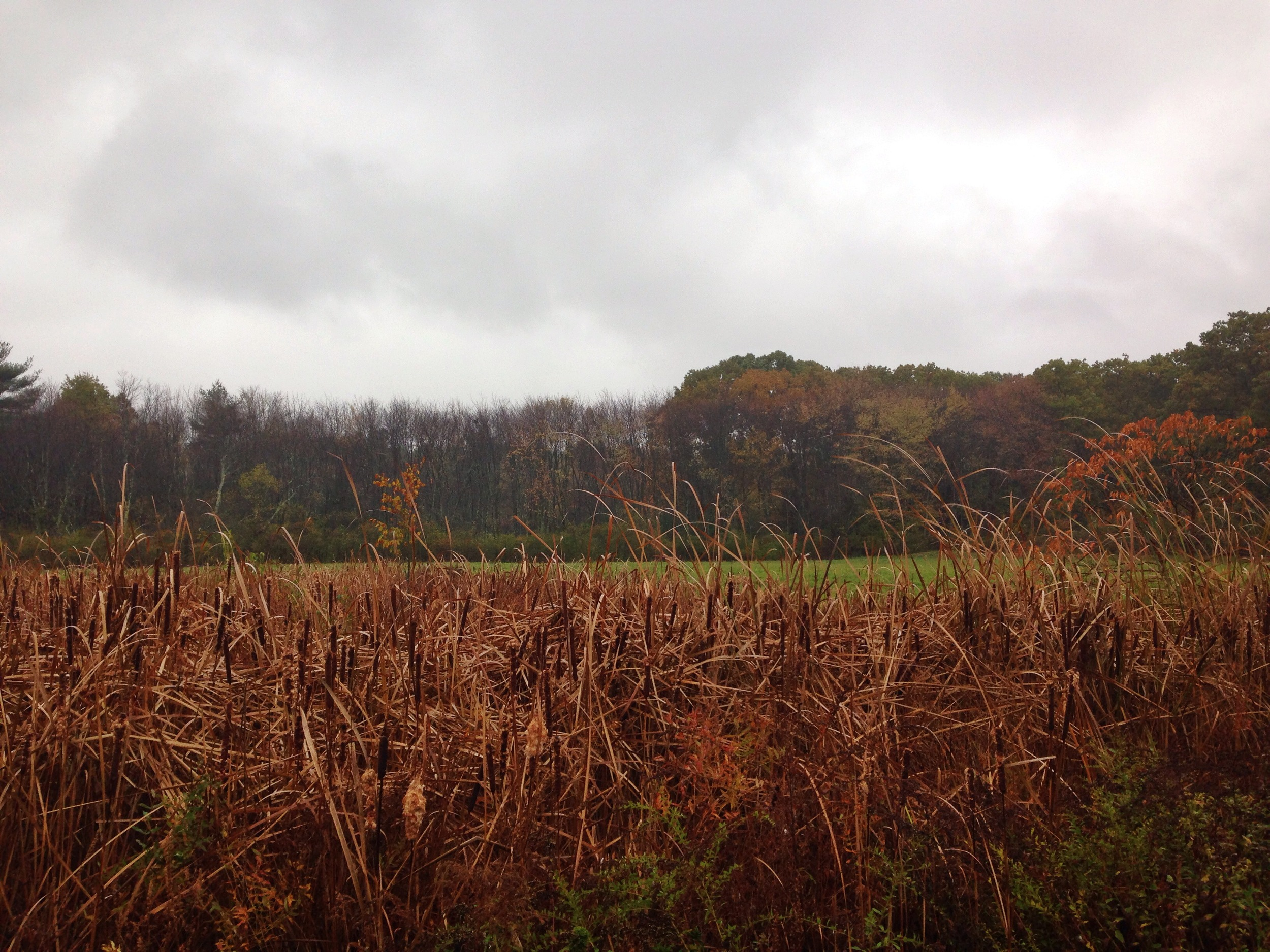 {Rainy, cold walk last week}