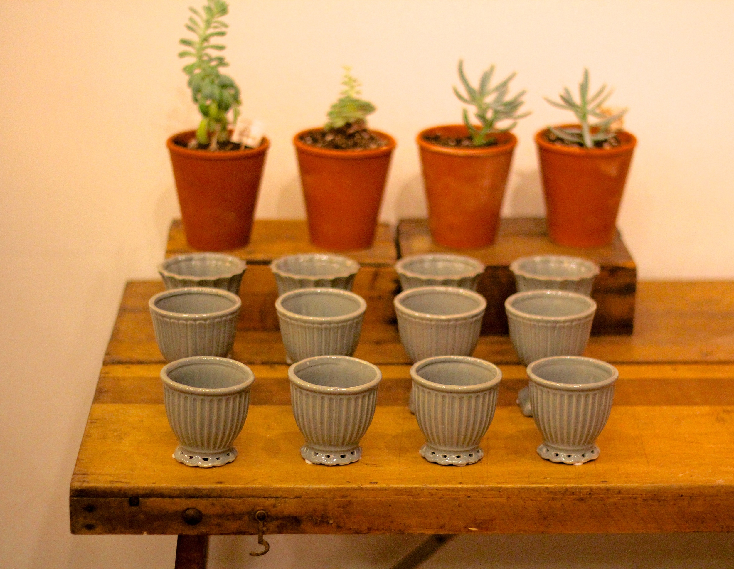 {Cute little bowls and plants at a shop in Boston}