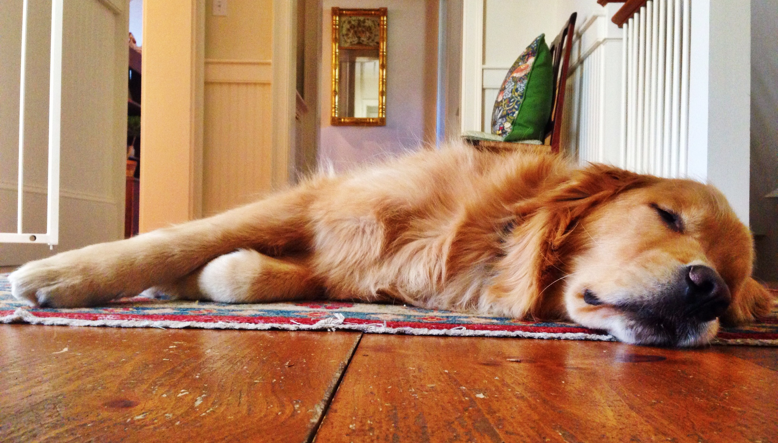 {What a stressed out dog I have}