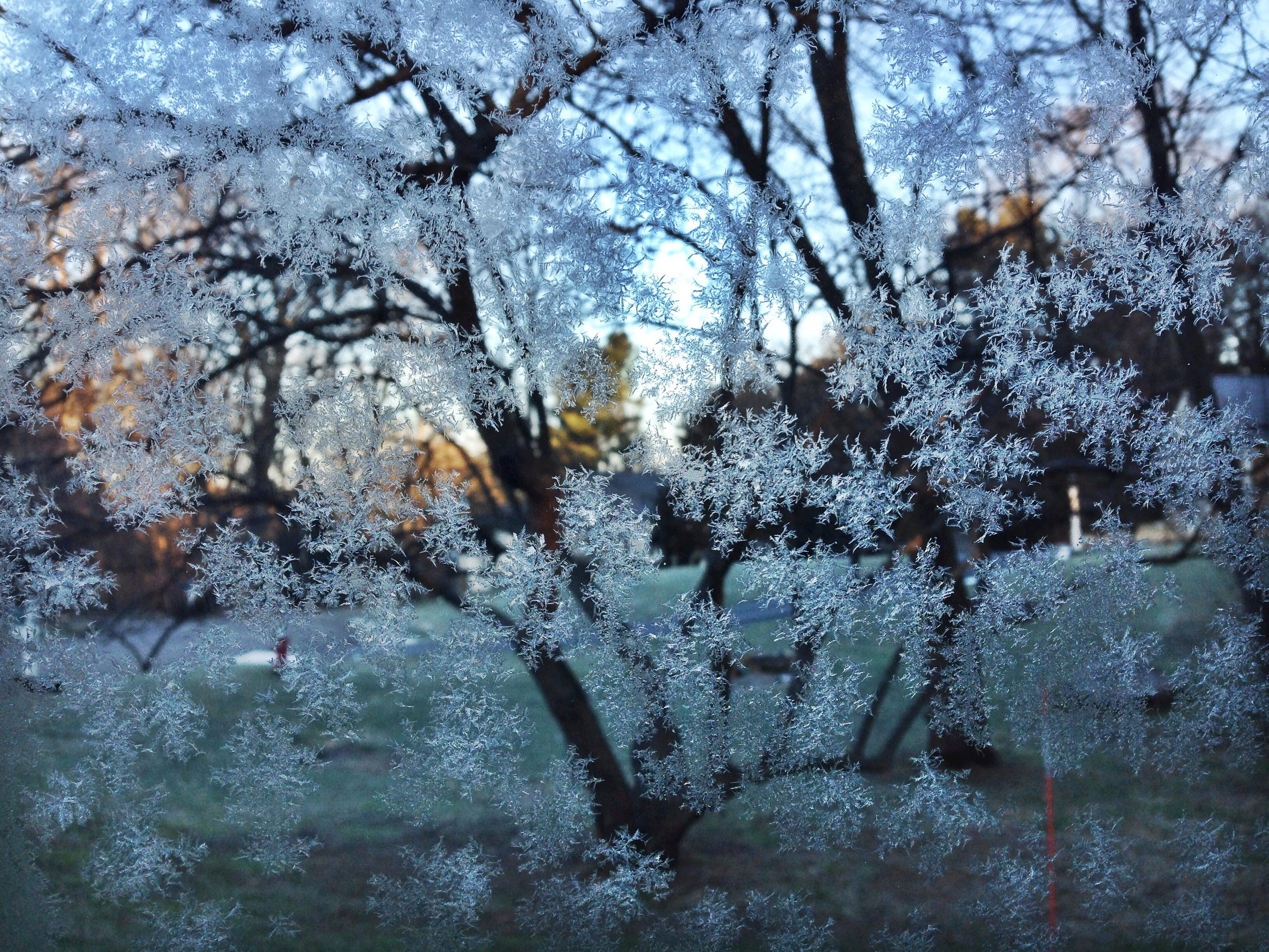{Frost forming on my car windows}