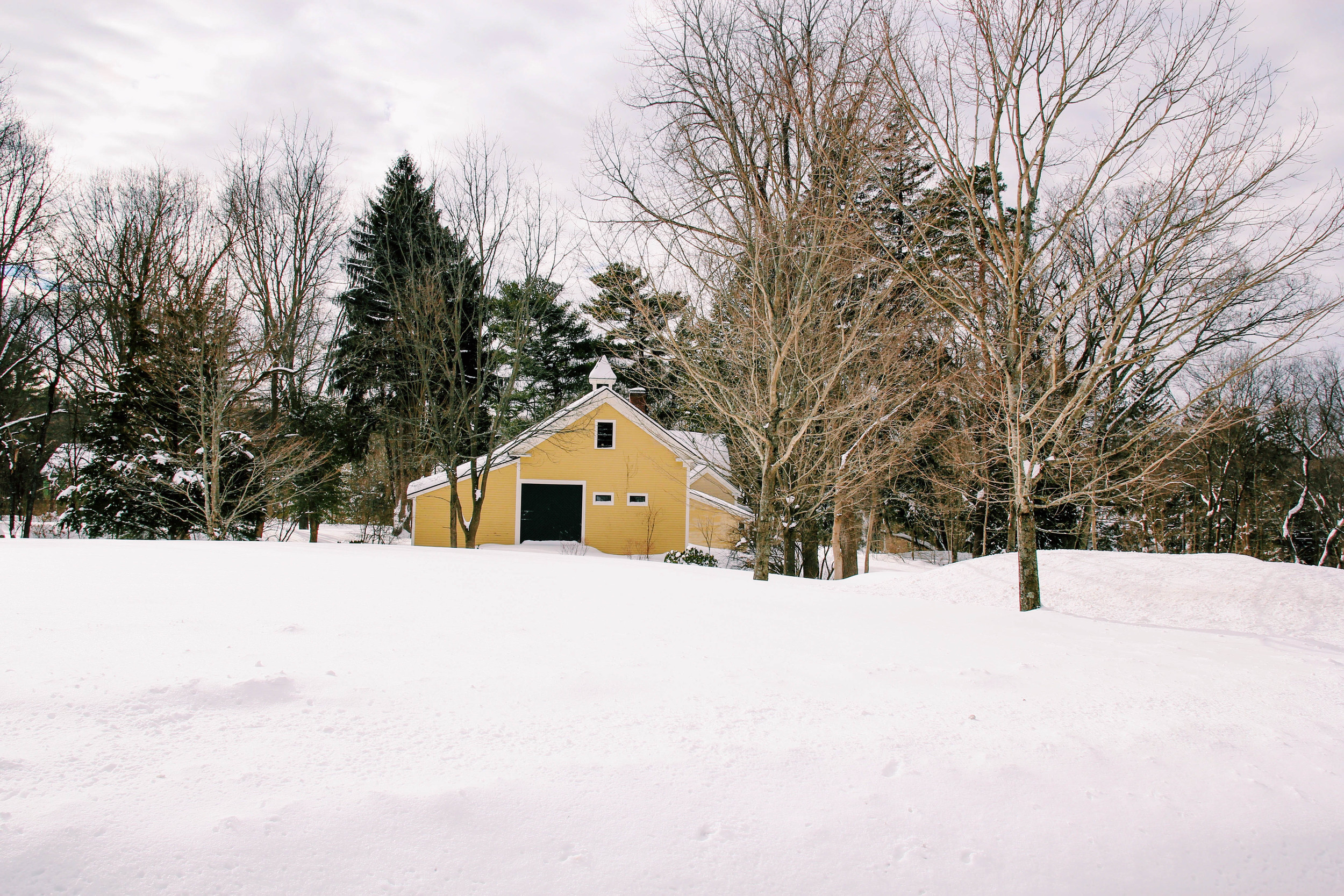 {Snow covered yard}