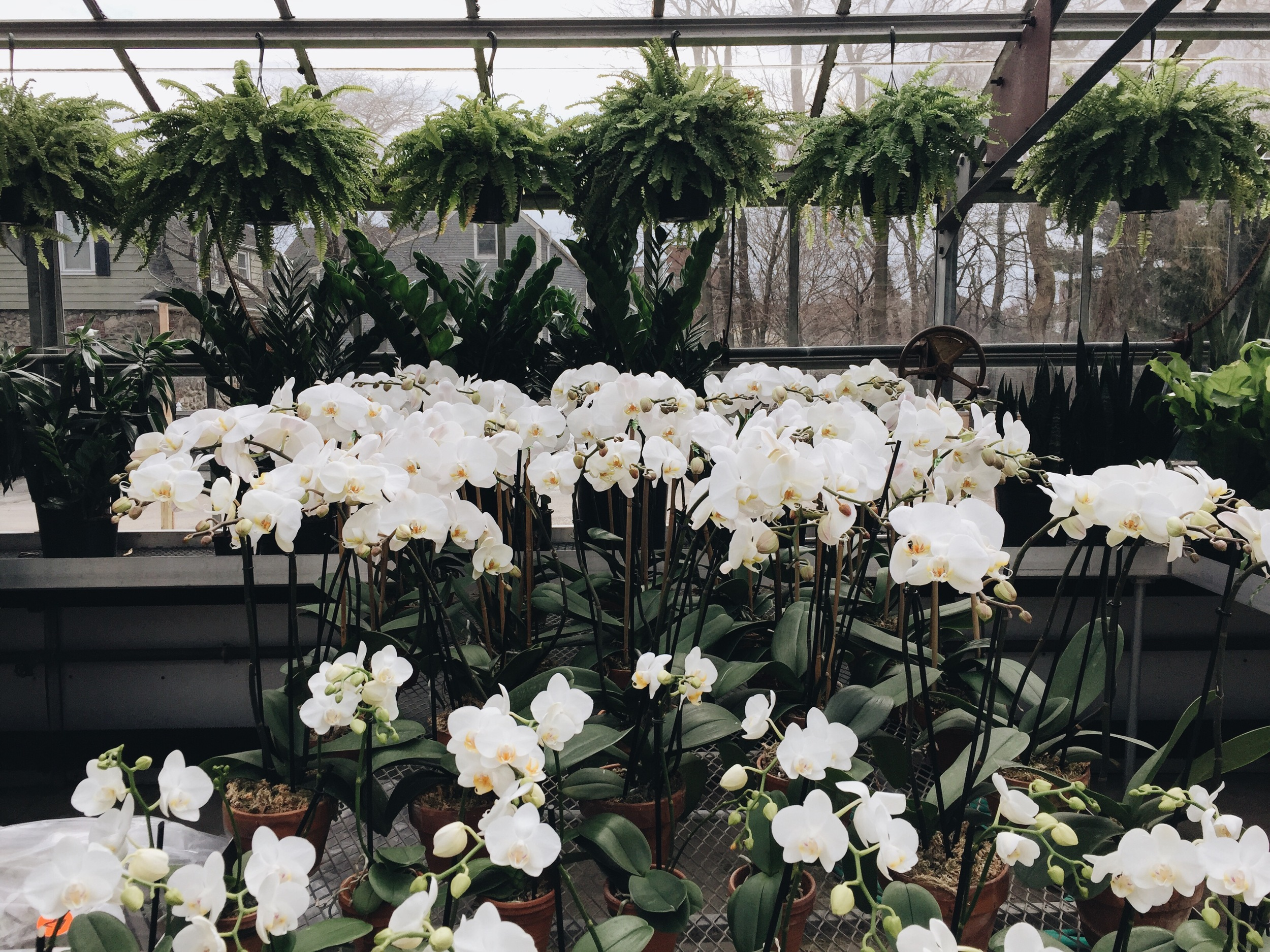 {Some beautiful orchids from a trip to Winston Flowers)