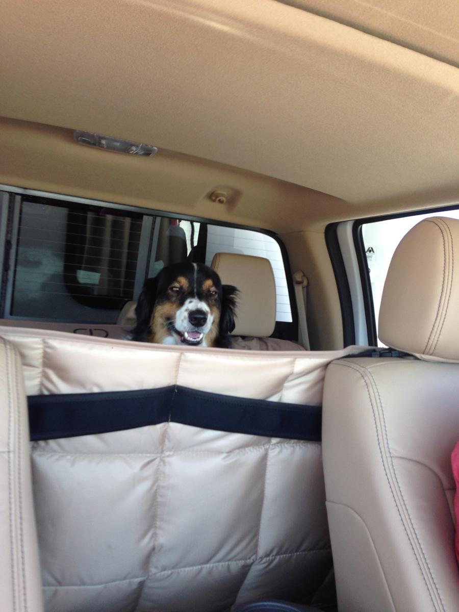 Backseat driver!
