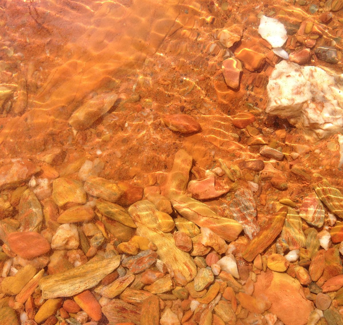 The orange/red pebbles under the water along the bank.