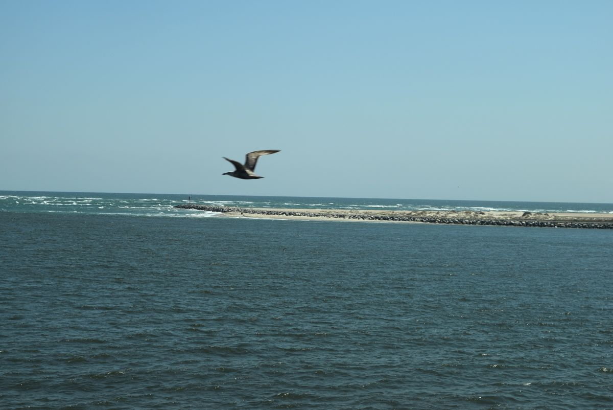 Crossing the Oregon Inlet, I got photo-bombed by a bird!