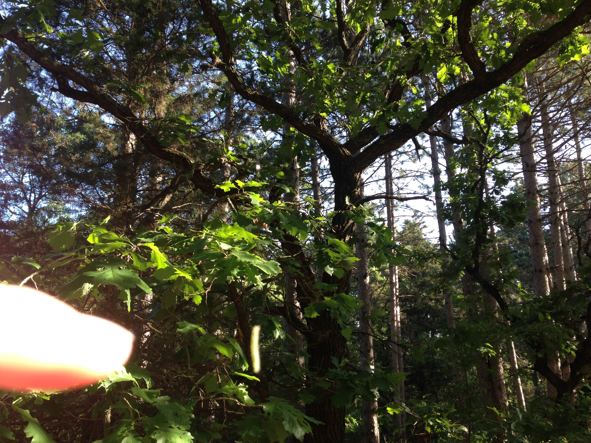 See the light green thing I'm pointing at? Thats a caterpillar, in mid air, hanging from a tree.