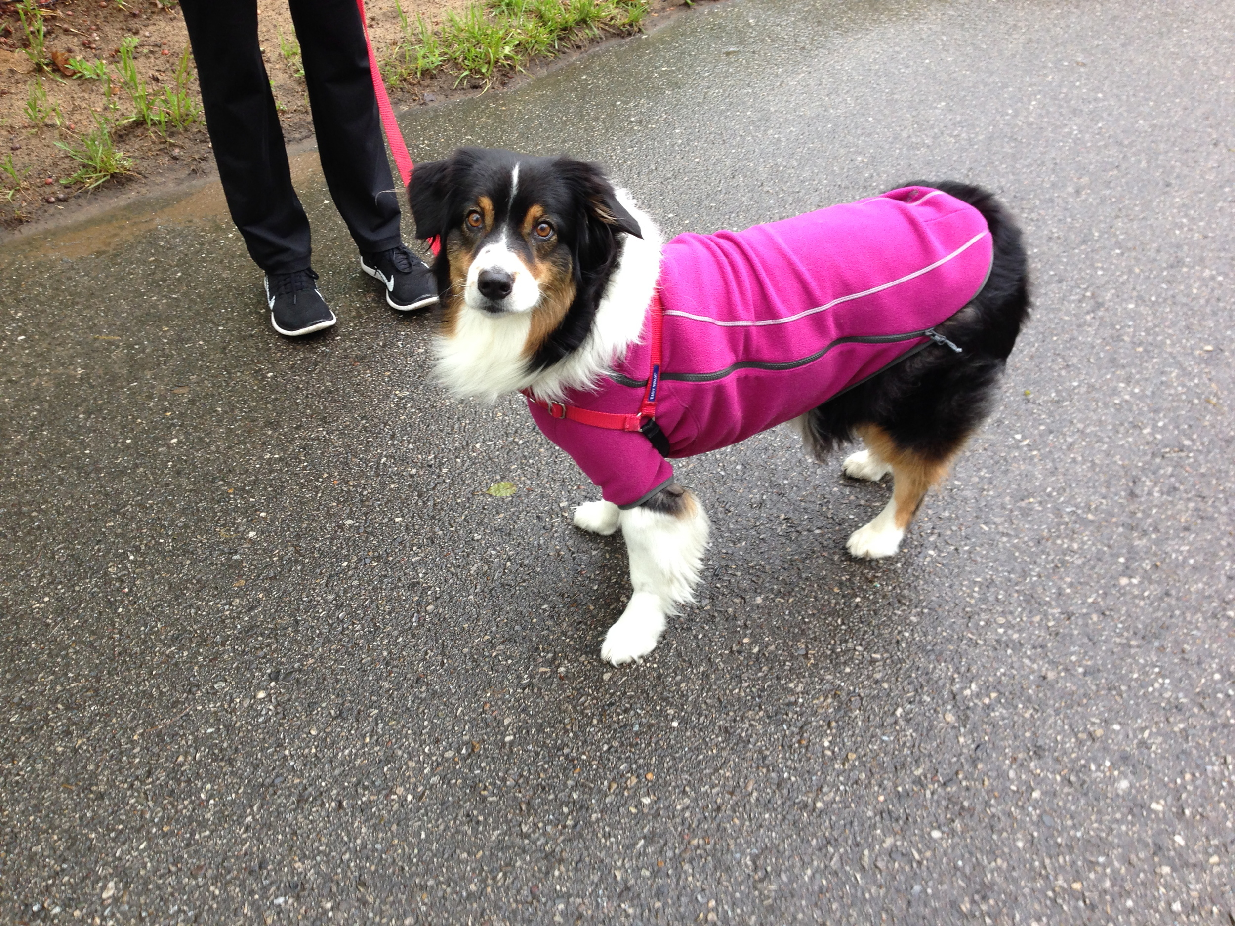 Fiona in her dress. I make her wear it when it's raining. it keeps her under carriage dry.