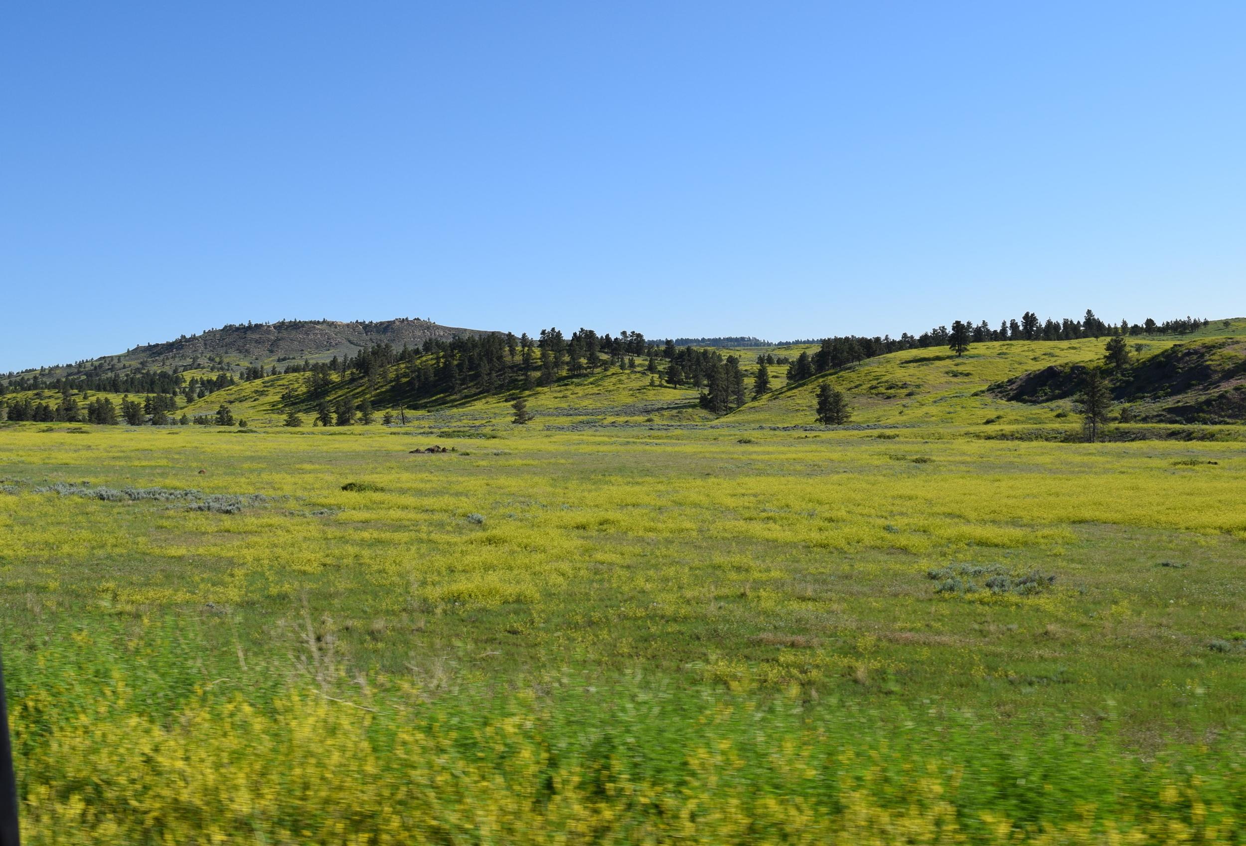 Open range, Montana