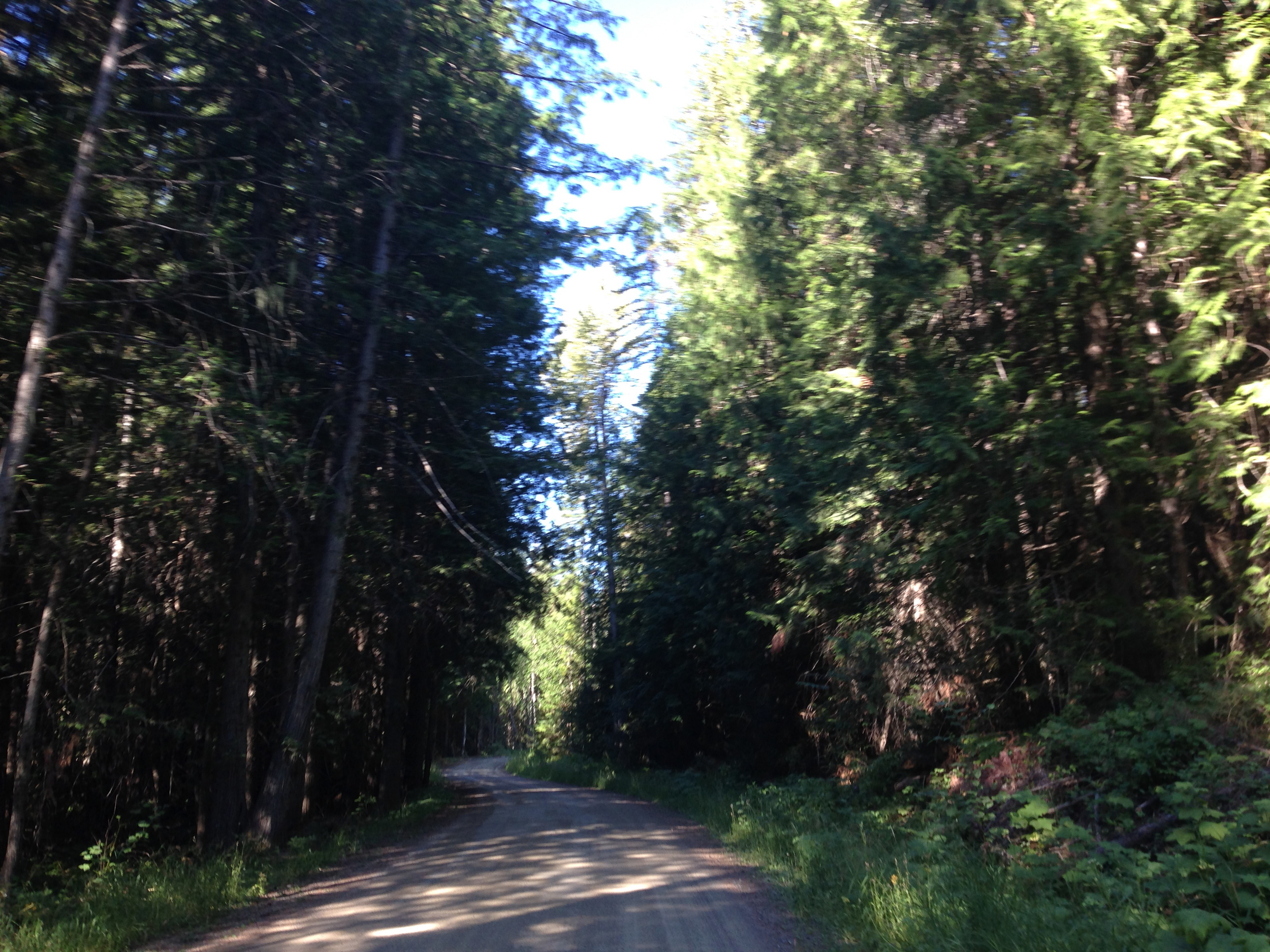 This is the dirt road across from the campground. A beautiful place for morning walks or runs!