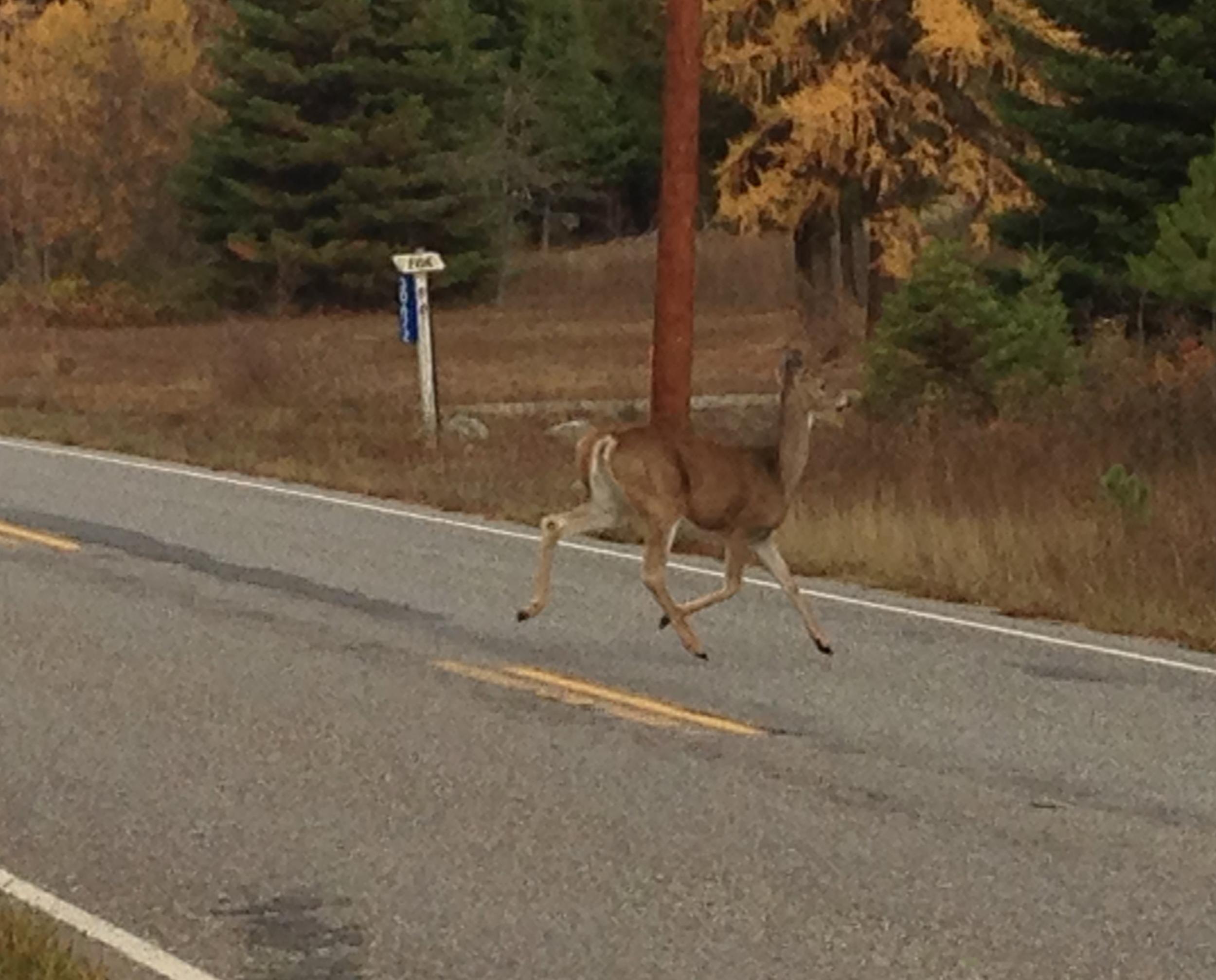 Goodbye deer.