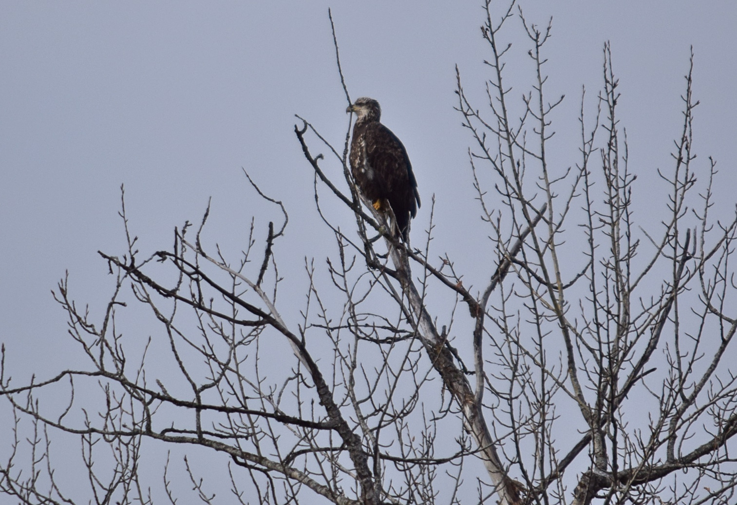 Some kind of bird of prey. Checking out the menu on the river.