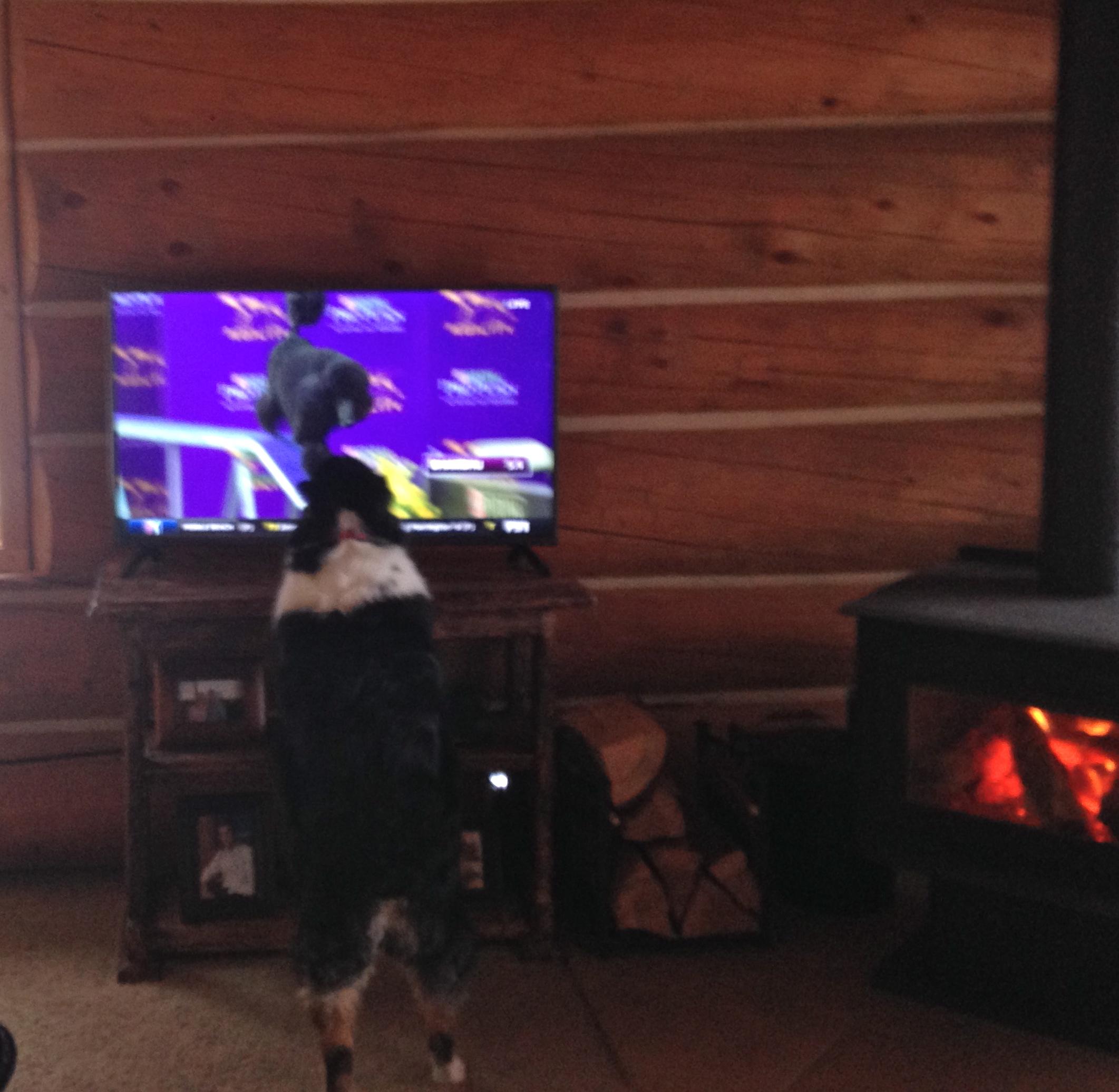 Fiona watching a poodle do dog agility.
