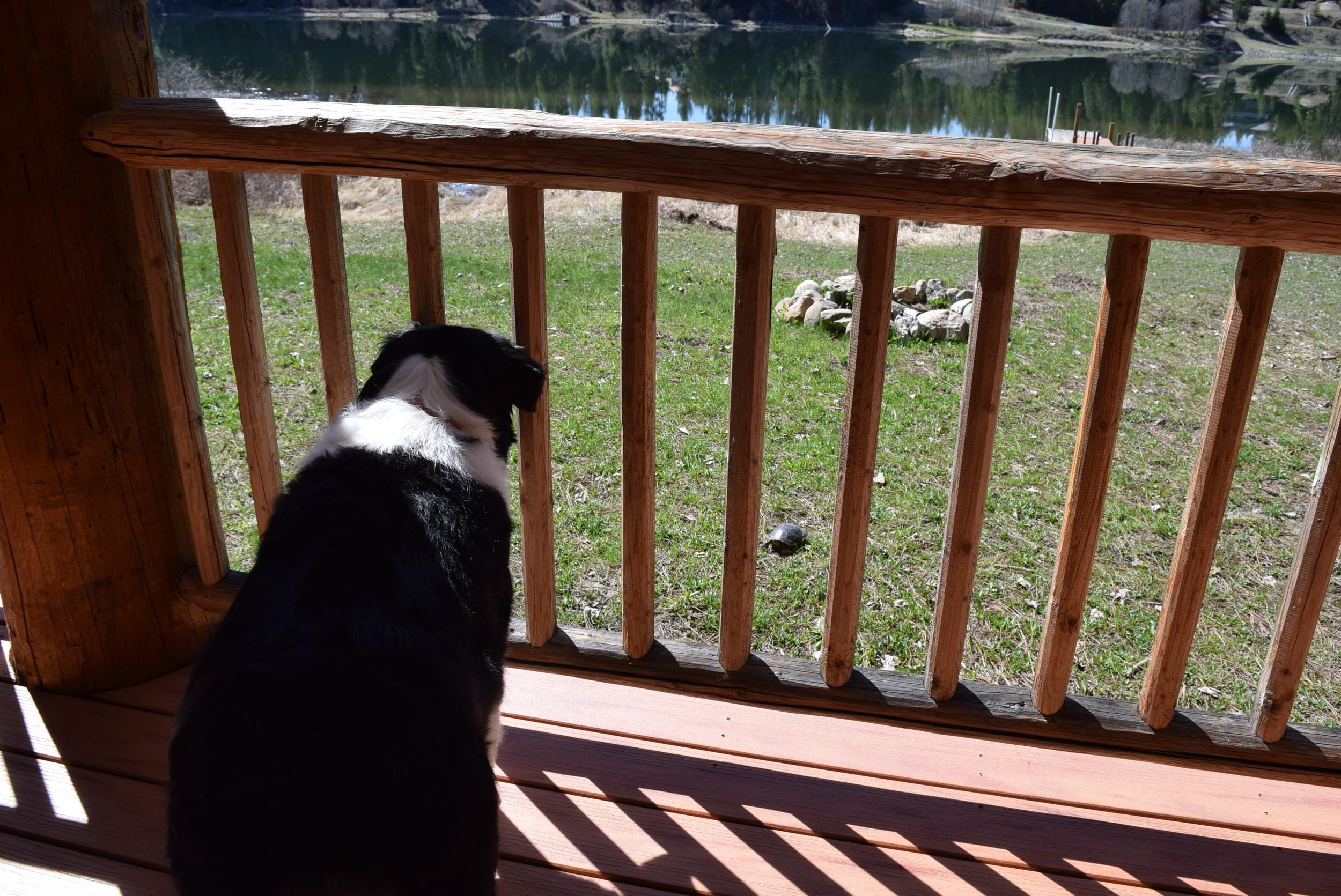 Fiona's first turtle friend.