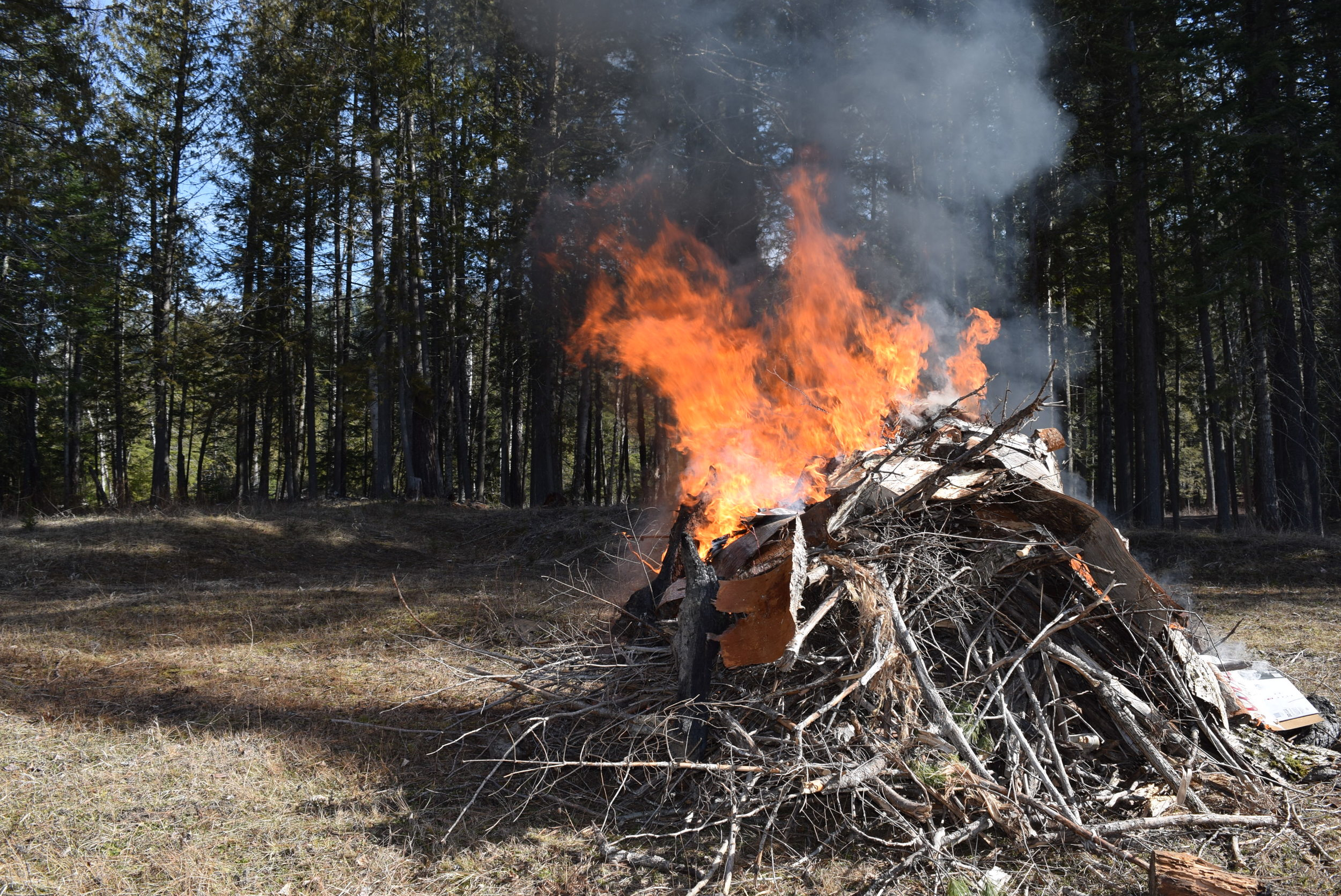 One of many slash piles we've burned. I don't think we will ever run out of sticks to burn!