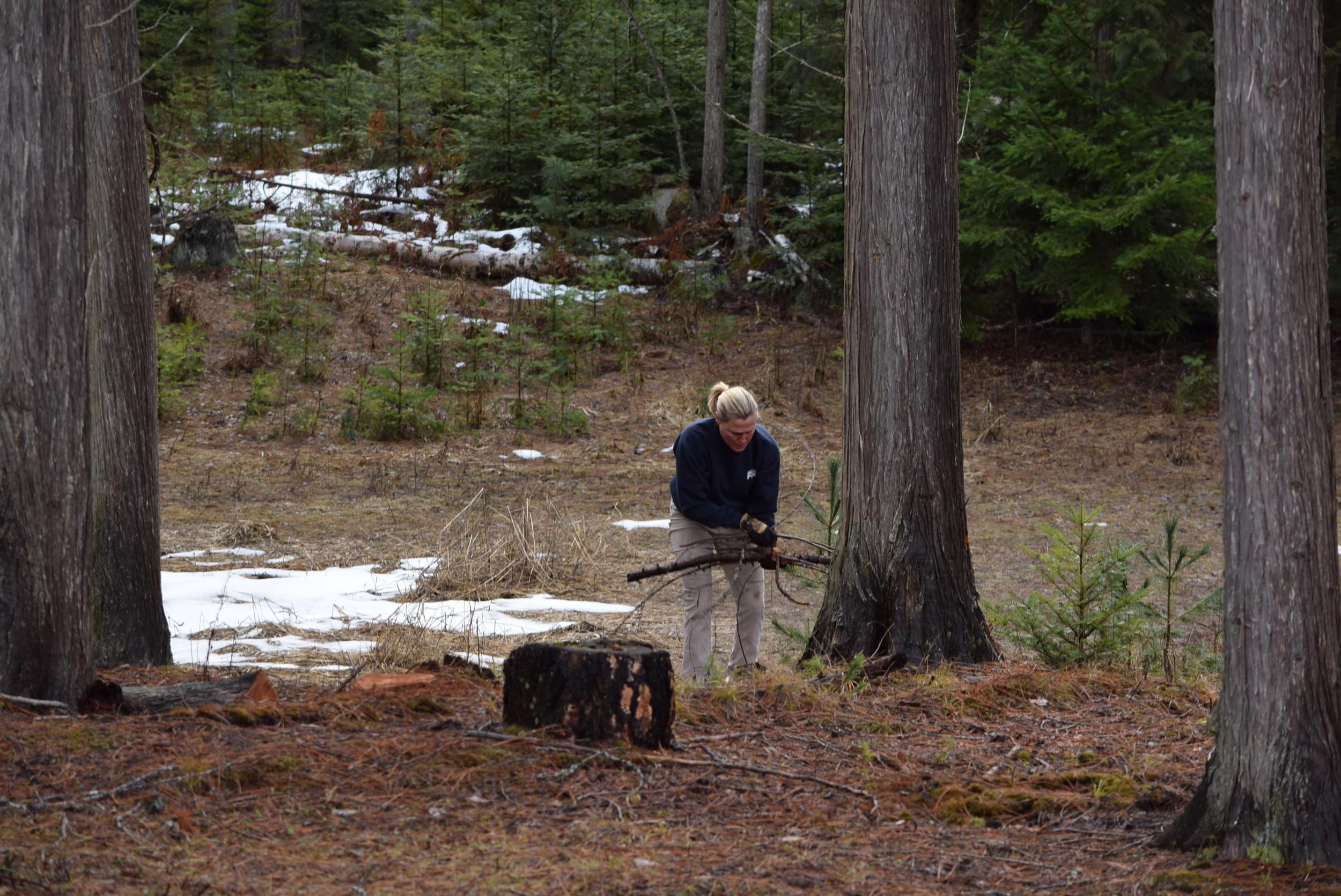 Picking up sticks.