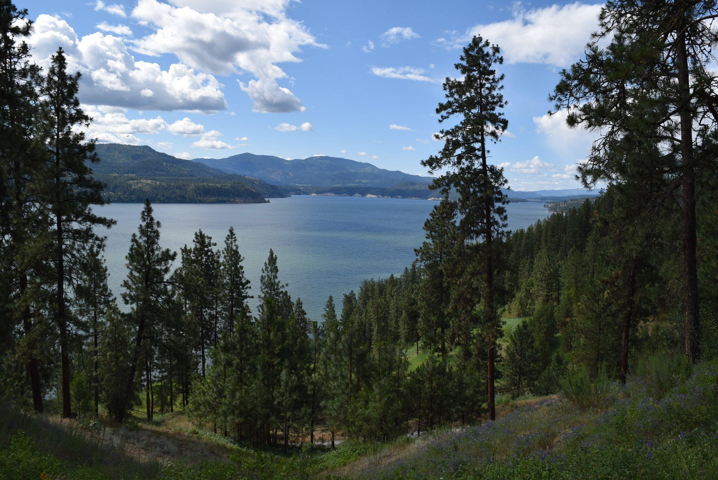 Lake Roosevelt, on the Columbia River.
