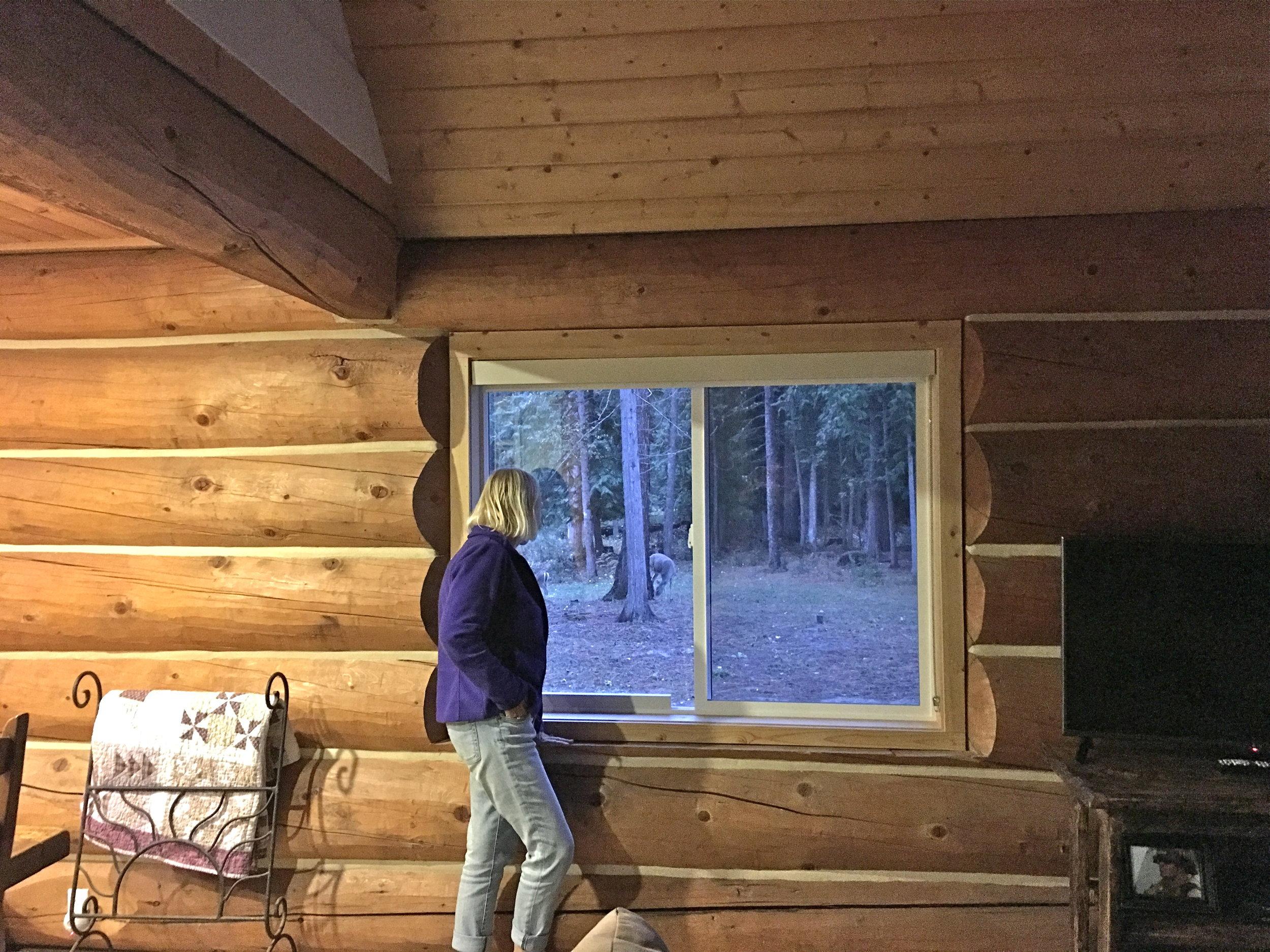 Jane watching the deer.