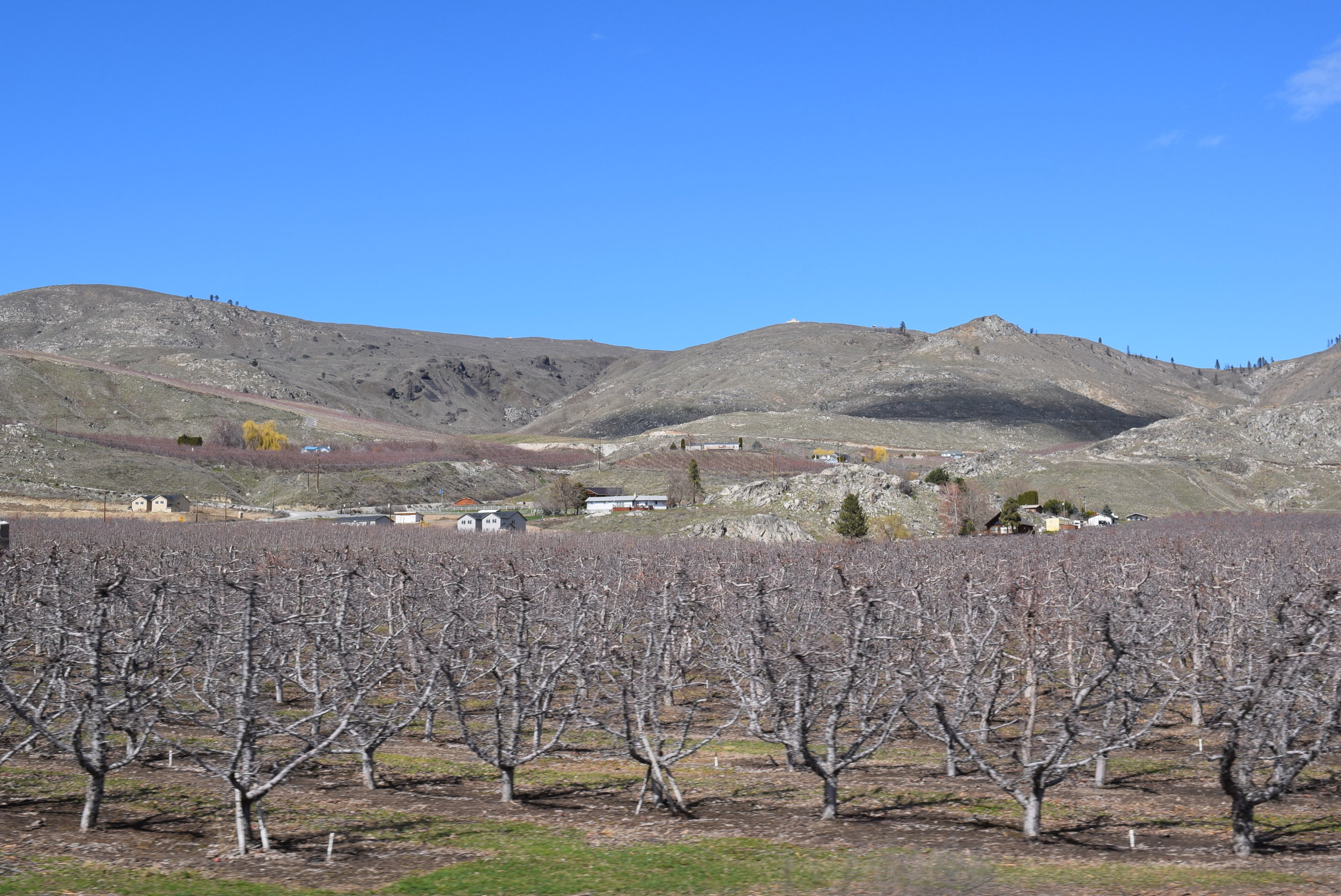 Vineyards in central Washington.