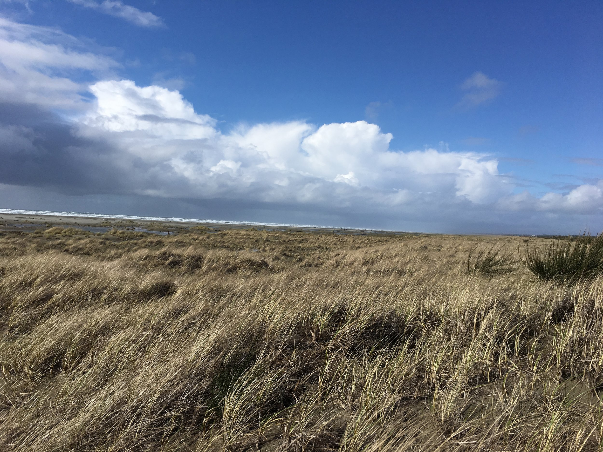 At Grayland Beach State Park, we had to walk over grassy dunes to the ocean.
