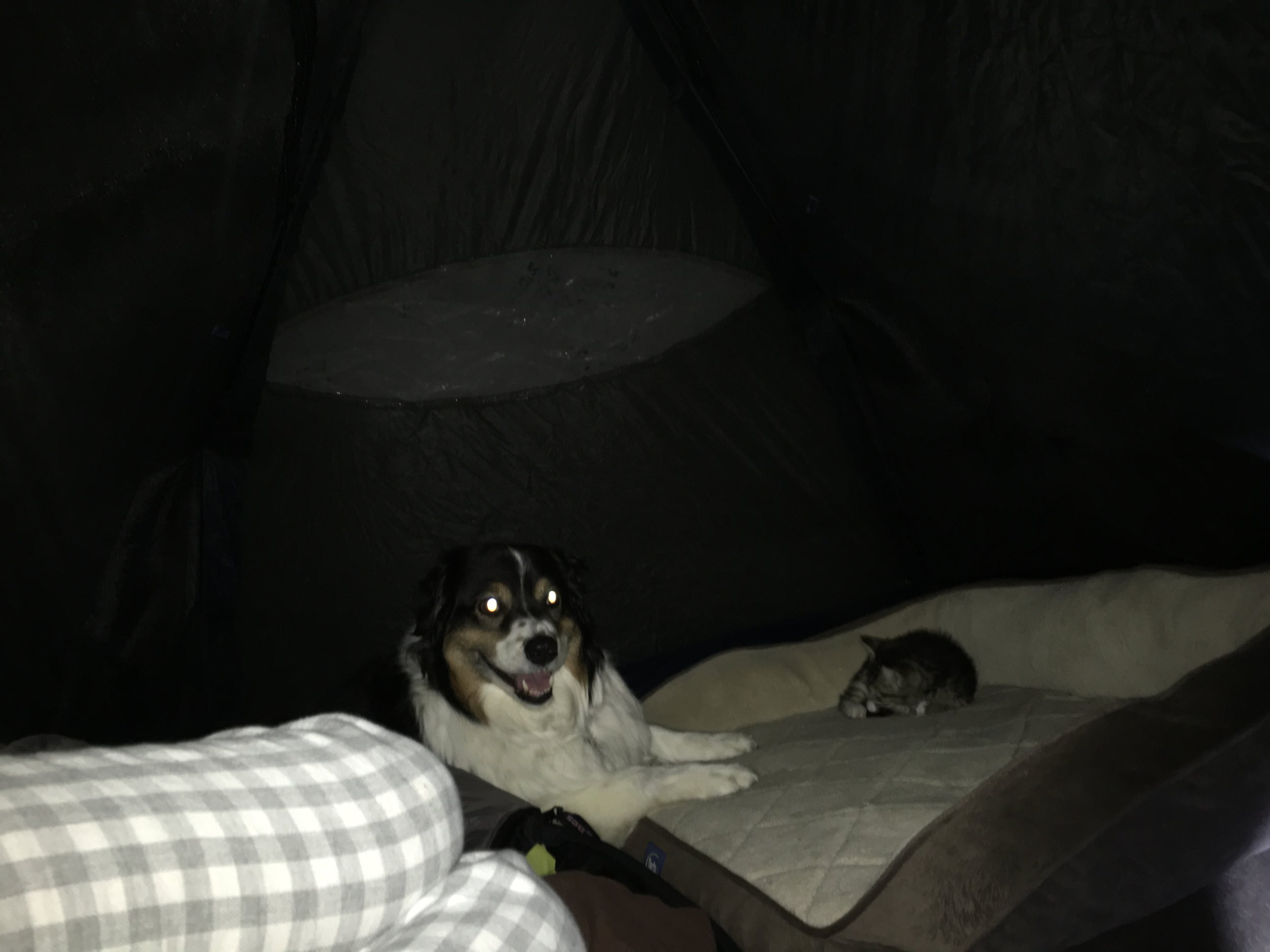 In the tent. Fiona loves cats but was a bit nervous to share a bed with one.
