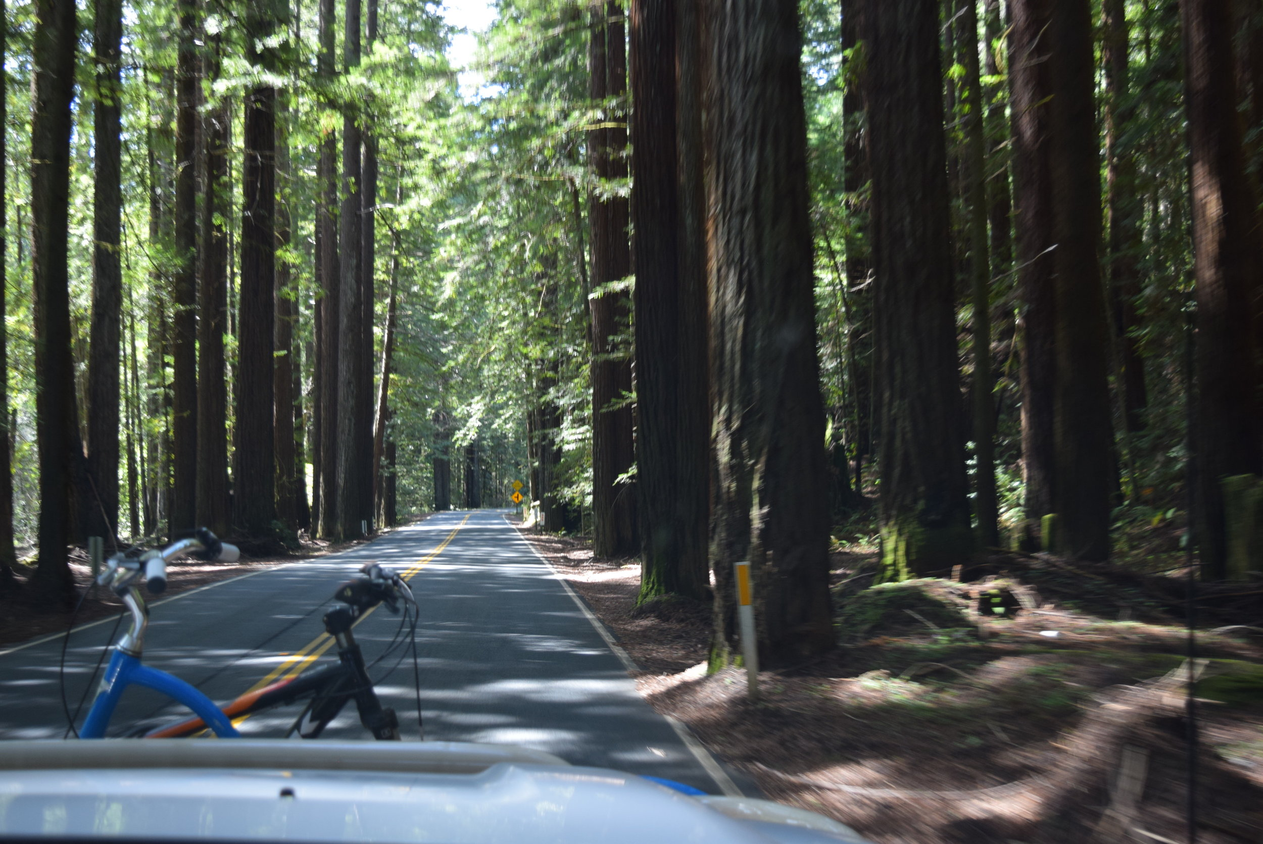 Driving through the redwoods.