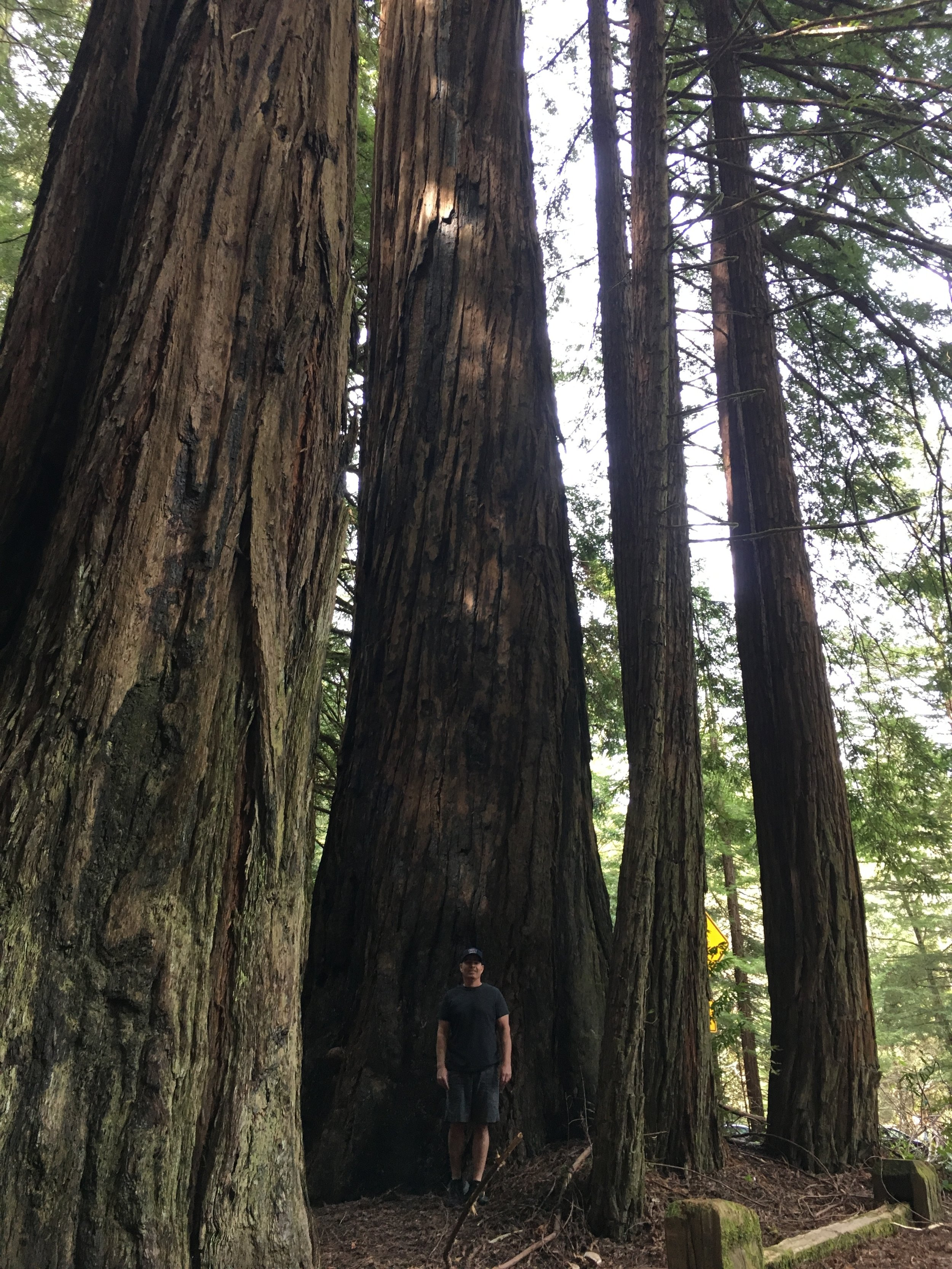 If you've never seen the redwoods in Northern CA, I highly recommend the trip. This was at Humbolt Redwoods State Park.