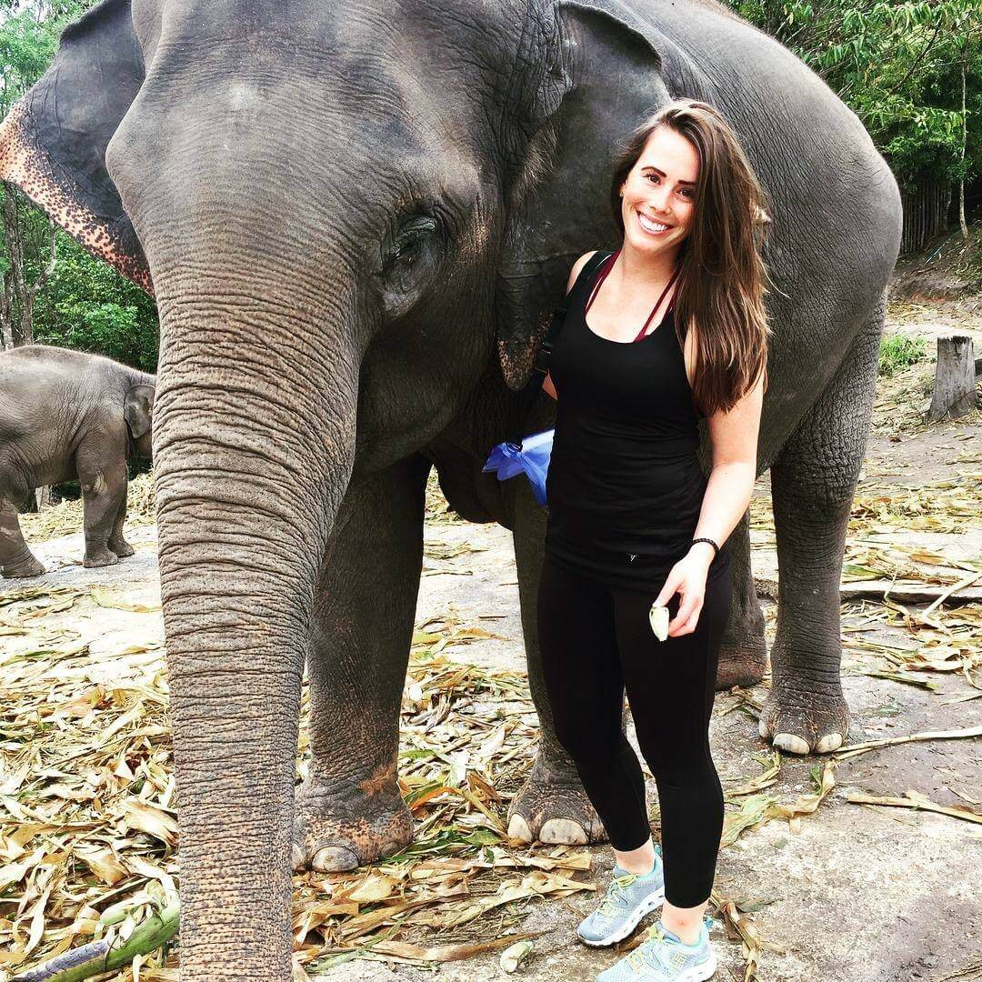 Amanda-elephant_meet-updater