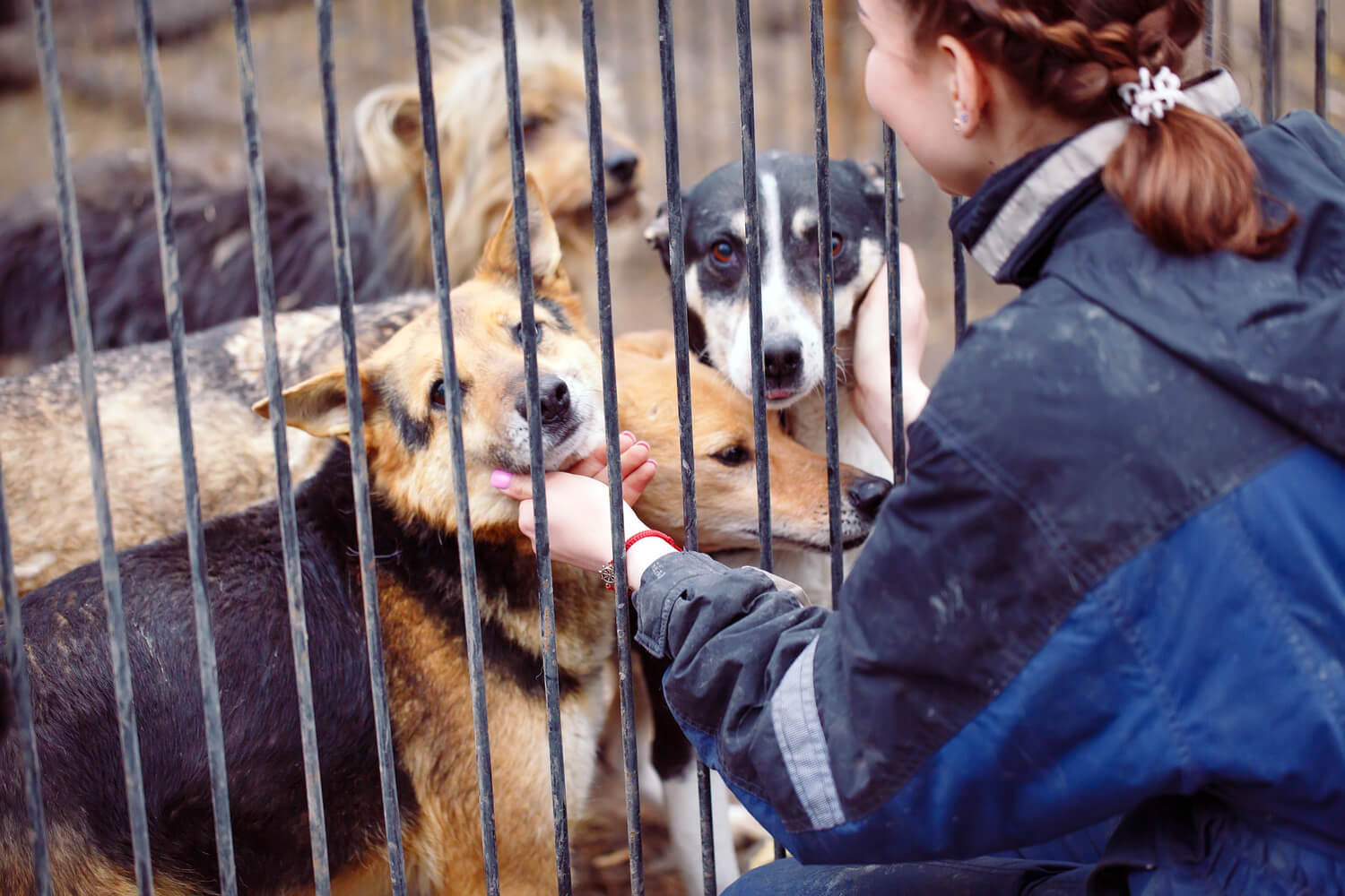 woman petting dogs - brokerages give back this winter