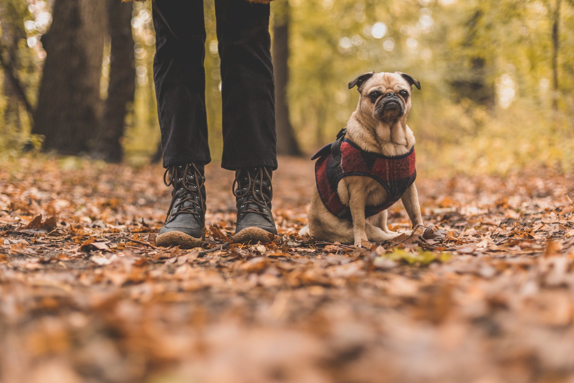 dog-in-leaves_find-dog-walker