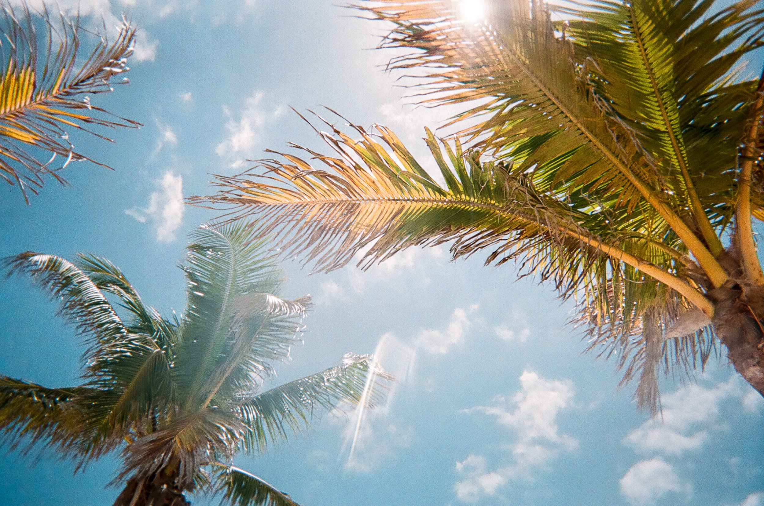 palm-trees-moving-to-florida