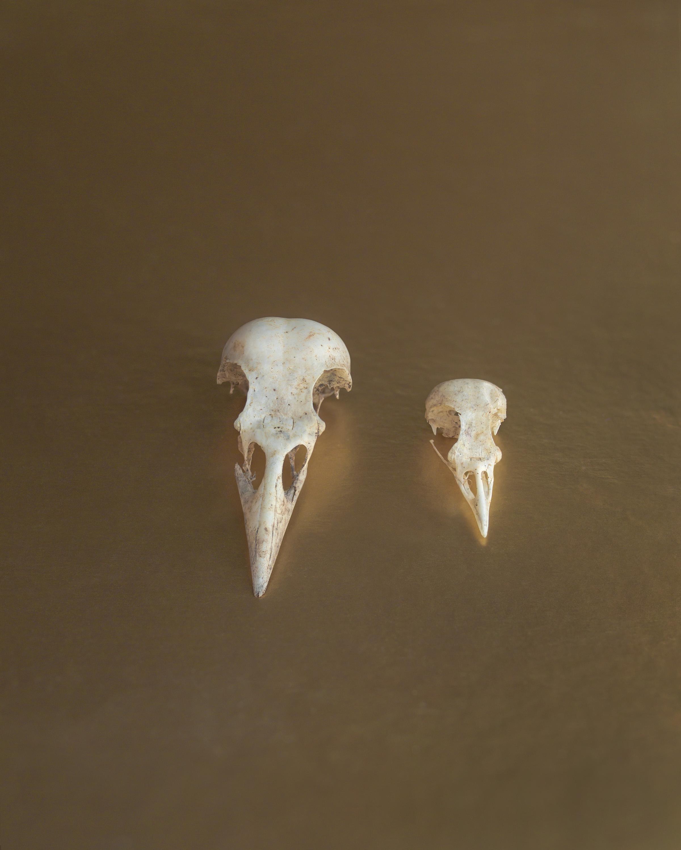 Bird Skulls.jpg