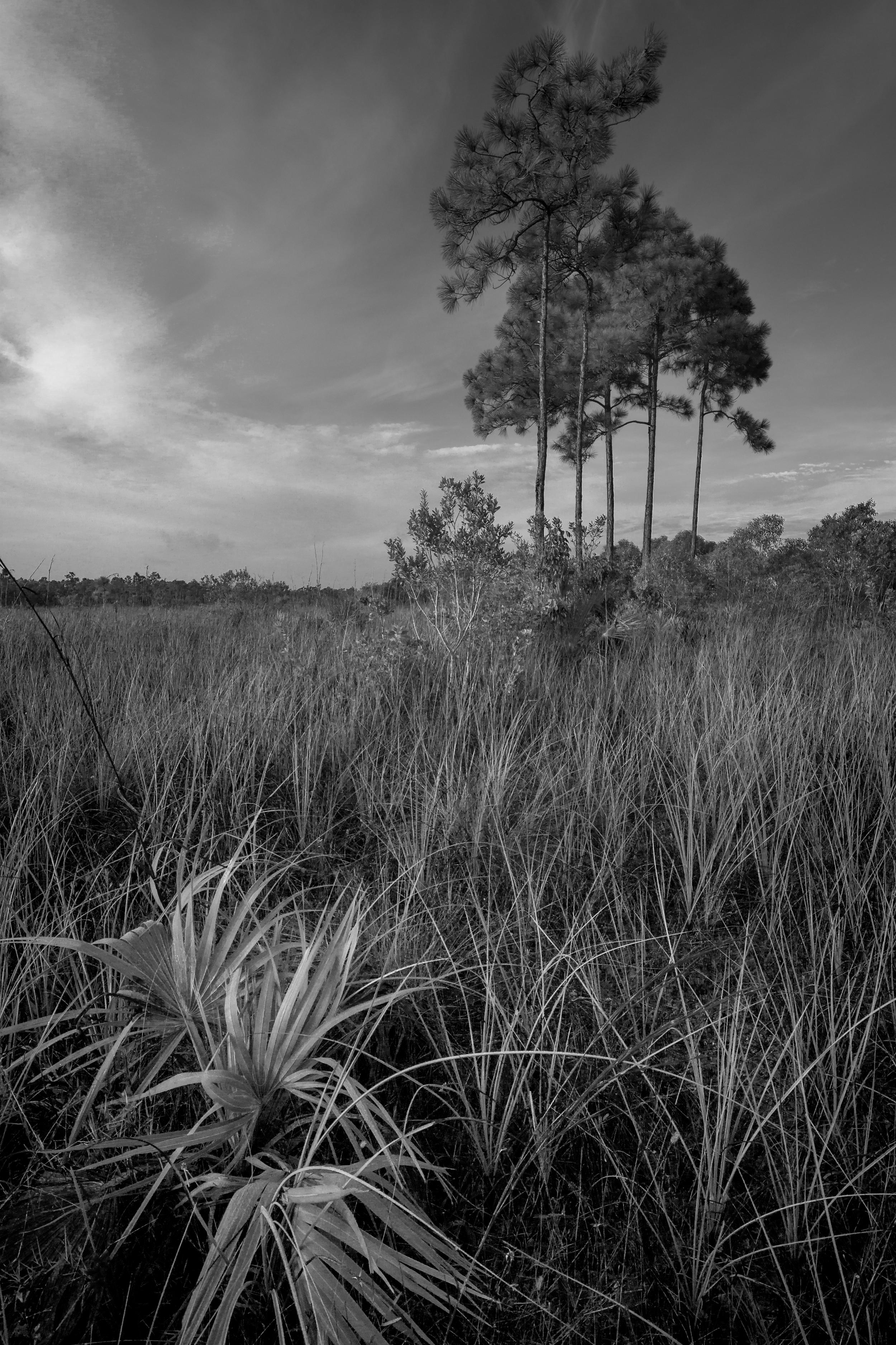 8 Pine Glades Lake at Dawn